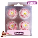 Stokrotki Różowe 12 szt Culpitt